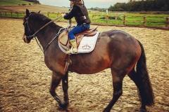 Harriet-Horse